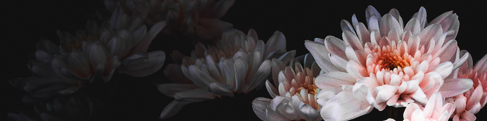 Flower 1000x250.png